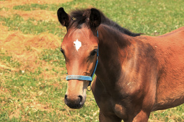 The little Foal on the Pasture