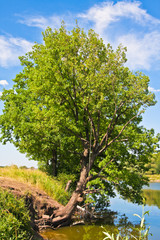 Tree over the pond