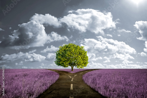 Fototapety, obrazy : Crossroad in lavender meadow