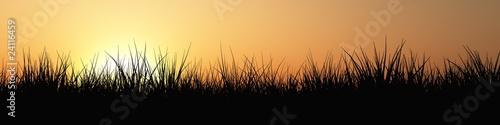 Gras Panorama bei Sonnenuntergang|24116459