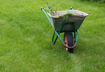 Garden wheelbarrow on a green grass lawn