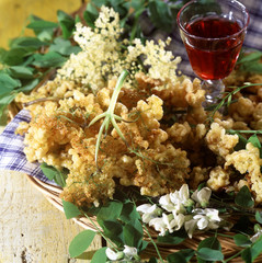 acacia blossom and elder fritters