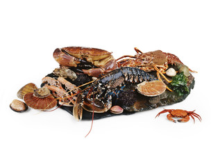 assorted seafood and shellfish