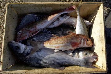 crate of fish