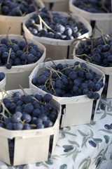 punnets of black eating grapes