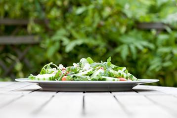 Frischer Salat im Garten