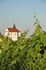 Church by the Vineyard. Ritoznoj, Slovenia