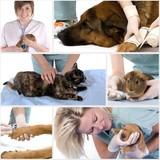 soins vétérinaires