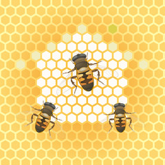 honey bee and honeycomb