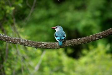 Zambia Birds