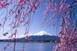 Mt.Fuji with cherry blossom