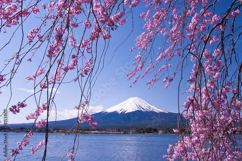 Foto op Plexiglas Japan Mt.Fuji with cherry blossom