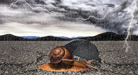 Lumaca sotto la pioggia