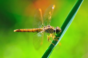 Dragonfly On A Perch with dark green background