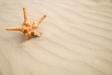 Star fish on sand background