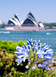 Sydney opera house and flower