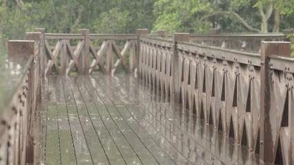 Raining on a Mangrove Park Wooden Walkway