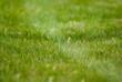 green short cutted grass