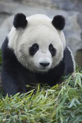 パンダと食事