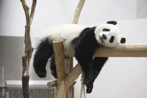 Deurstickers Panda 休むパンダ