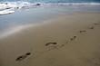 Footprints on the beach of Puerto Escondido