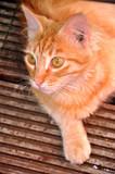 Gato. poster