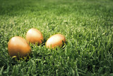 Big golden eggs on the grass to represent wealth and luck poster