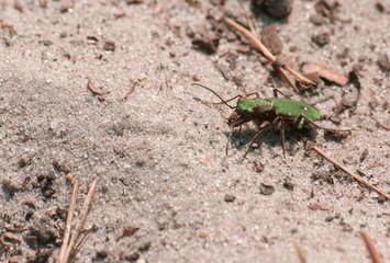 Photos illustrations et vid os de insecte volant - Insecte vert volant ...