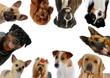 dix portraits de chiens différents en rond