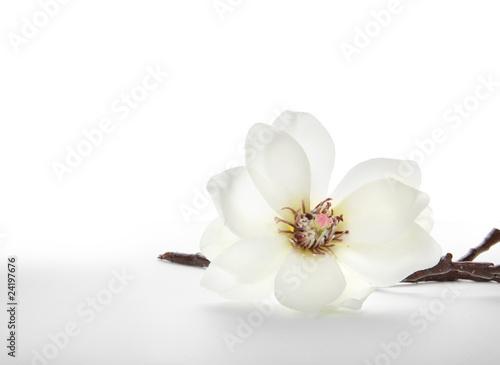 Aluminium Magnolia Magnolie
