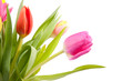 bouquet of Dutch tulips in closeup over white background