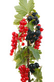 Branch currants