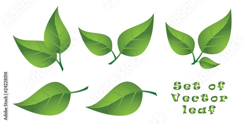Set of Vector Leaf