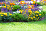 Fototapety multicolored flowerbed on a lawn