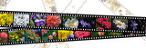 Filmstrips of flowers