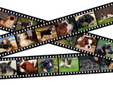 Canine filmstrip illustration poster