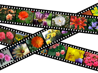 Floral filmstrips illustration