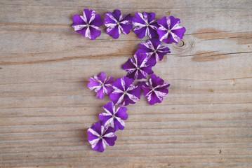 7 en fleurs