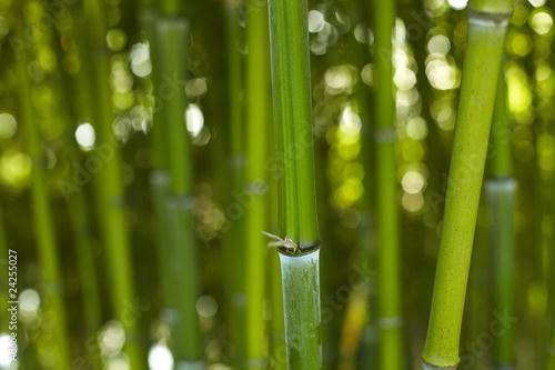 bambus-bamboo-01