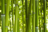 Fototapety Bambus Bamboo 06