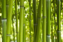 Bus Bamboo 06