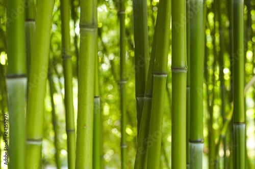 Keuken foto achterwand Bamboe Bambus Bamboo 06