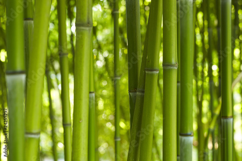 piekne-zielone-bambusy