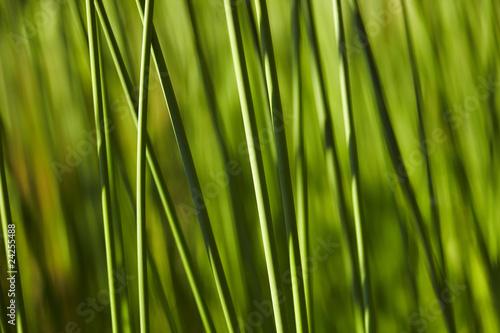 In de dag Bamboo Schilf 01