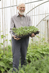 Organic Farmer Holding Tray Of Seedlings In Greenhouse
