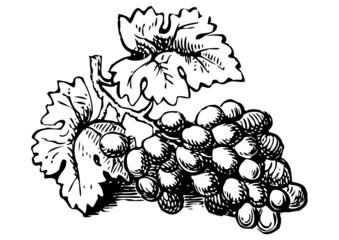 grabado racimo de uvas negro