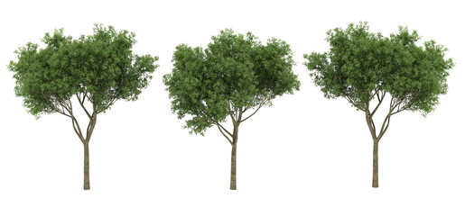 isolated 3d tree