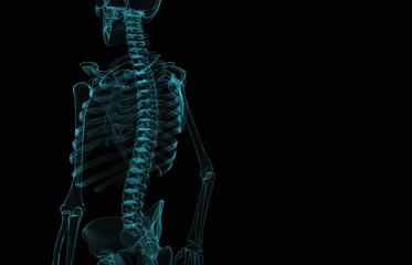 Human skeleton x-ray