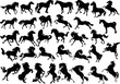 thirty four horse silhouettes