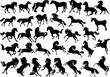 thirty four horse silhouettes